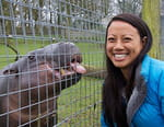 Opération hippopotames pygmées