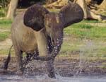 L'Afrique des paradis naturels