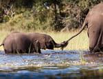 L'éléphanteau qui voulait être adopté