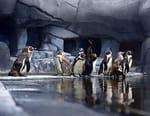 Au coeur du zoo de Paris
