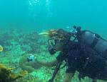 Guadeloupe, sur la route du corail