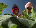 La nature de la vie : l'Afrique en quête d'un futur durable