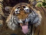 La route du tigre