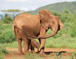 Une saison chez les éléphants