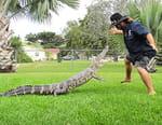 Gator Boys : au secours des alligators