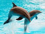 La femme qui parlait aux dauphins