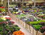 Rungis : dans les coulisses du plus grand marché du monde