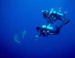 Odyssée Pacifique