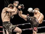 Kick-boxing - Enfusion Live 2016