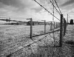 Les évadés du camp de Sobibor