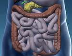 Intestin, le tube du siècle