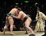 Sumo - Fight Sports Grand Sumo