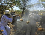 Les sauveteurs d'abeilles