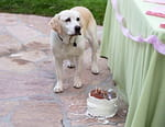 Le chien qui a sauvé l'été