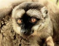Les 20 chefs-d'oeuvre de la nature : Parc national d'Andasibe (Madagascar)