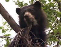 S.O.S. animaux en danger : Mission espèces rares