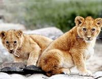 Redoutables prédateurs : Né pour tuer