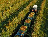 Au gré des saisons : Automne : La fête des récoltes