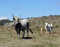 Les animaux de la 8 : Dans les coulisses du Puy du Fou et du Bioparc de Doué-la-Fontaine