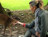 Hélène et les animaux : L'incroyable cycle de la vie des animaux
