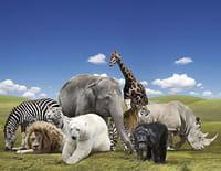 Journal d'une réserve africaine : Un éléphant dans les airs