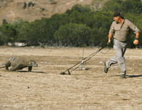 Croco chroniques : L'intelligence des crocodiles