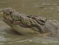 72 animaux dangereux en Australie : Dangers inconnus